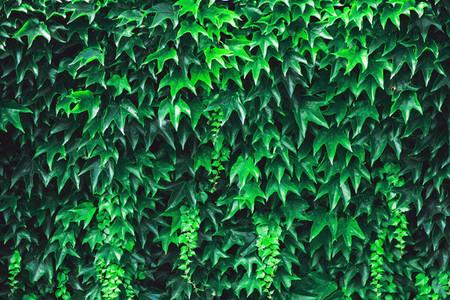 Green Vegetation Background