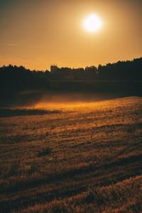 Morning Sun On A Meadow