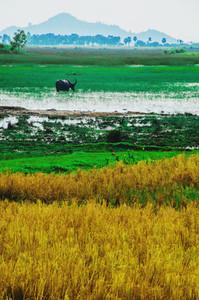 Beautiful Cambodian countryside