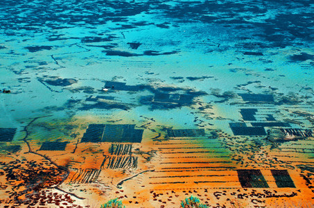 Seaweed Gardens