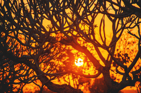 Golden tree sunset