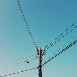 Bird sitting on an electric pole