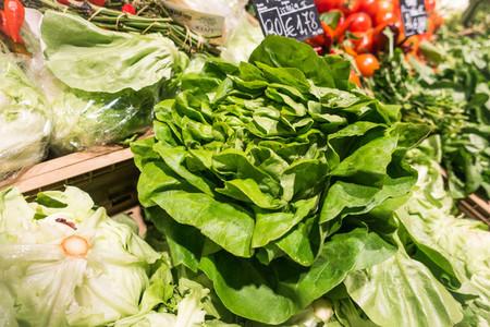 Crispy green lettuce