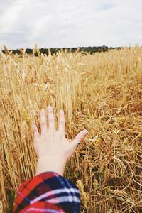 Hand touching wheat