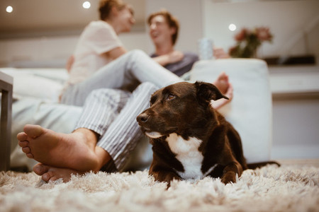 Happy couple with a pet dog at home