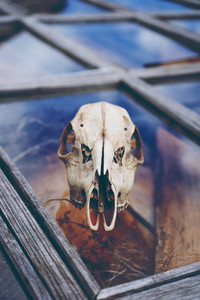 Animal skull over a window