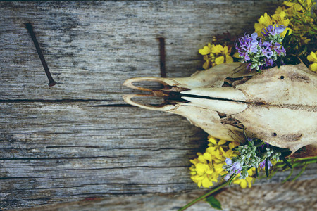 Animal skull with flowers
