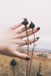 Hand touching dry plants