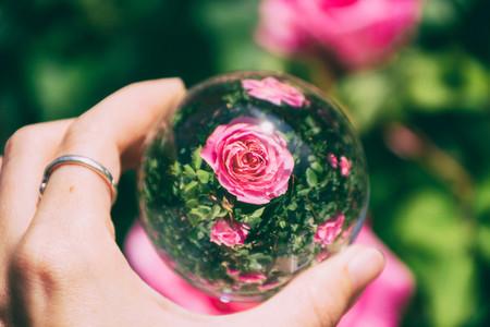 Flowers through a crystal ball