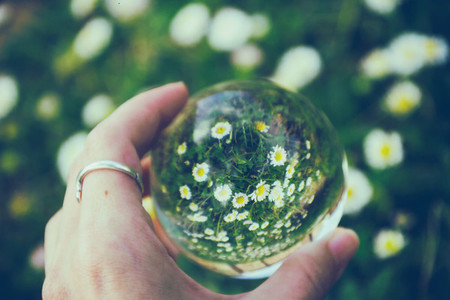 Flowers through a crystal ball