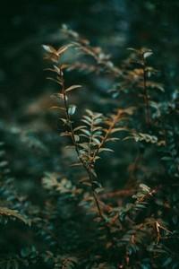 Green leaf in a dark forest