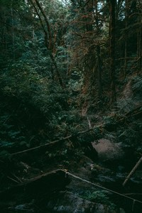 Green Forest 03