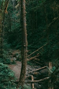 Green Forest 01