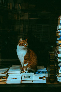 Cat sitting on the books