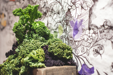 Fresh kale with artistic backgro