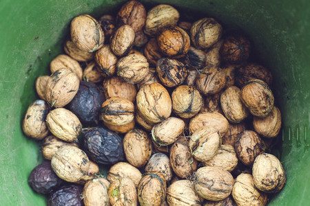 fresh bio walnut6