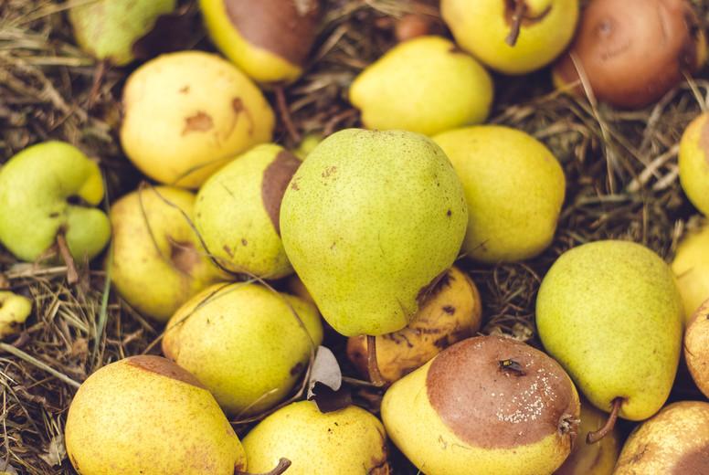 windfall bio pear