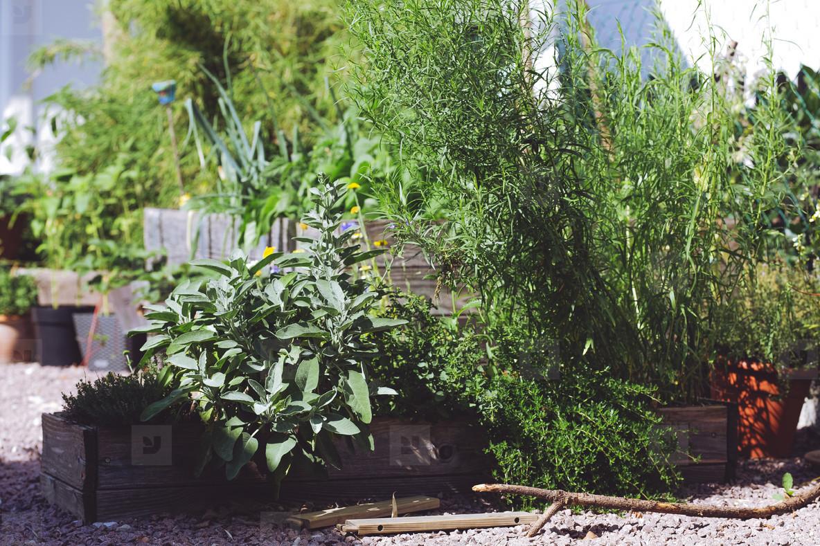 Photos Fresh Bio Garden Herbs Youworkforthem