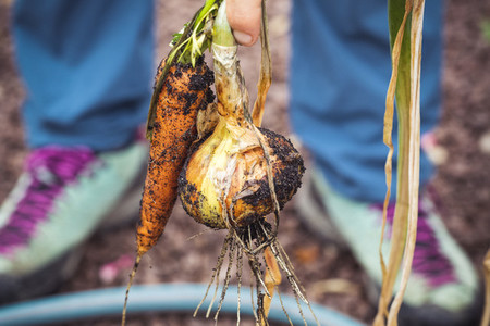 urban gardening vegetable harvest crop