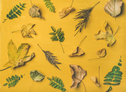 Autumn or Fall pattern  background and texture over yellow background