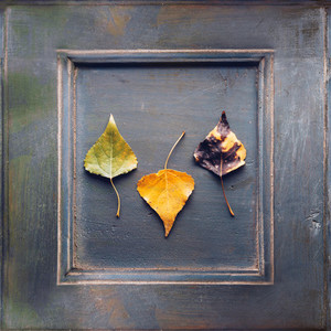 Wooden frame with three dry leaves