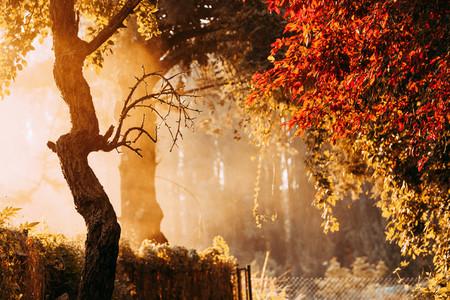 Foggy path with orange leaves