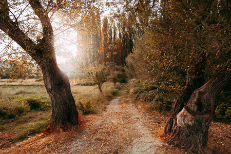 Autumn path with fallen leaves