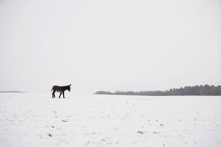 Farm To Fields 11