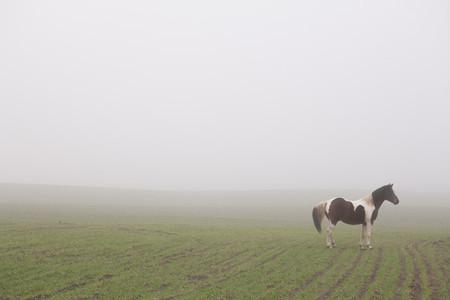 Farm To Fields 64