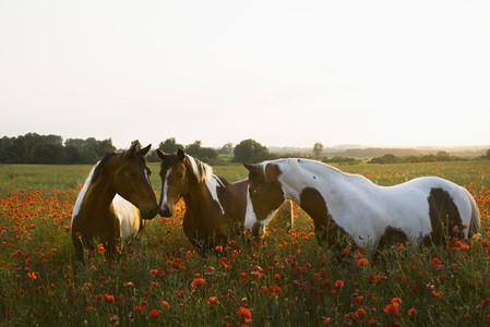 Forever Farm Fields 08