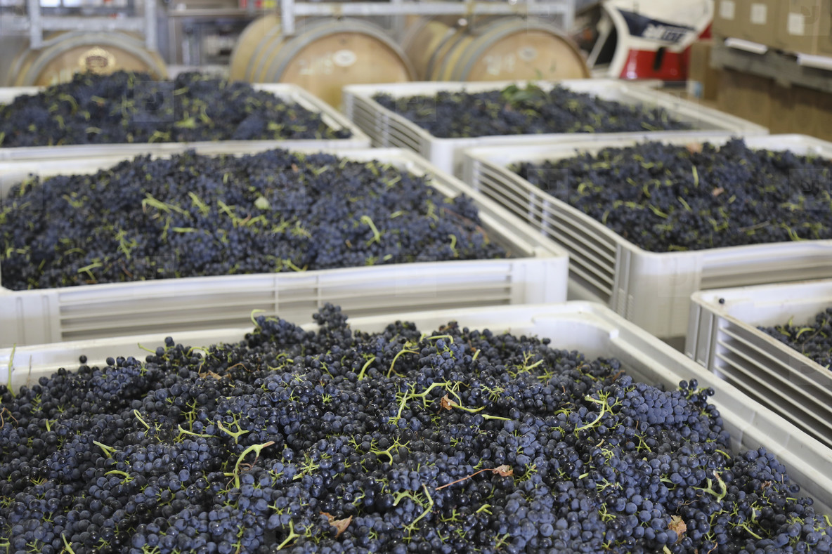 Vines Of Life  11