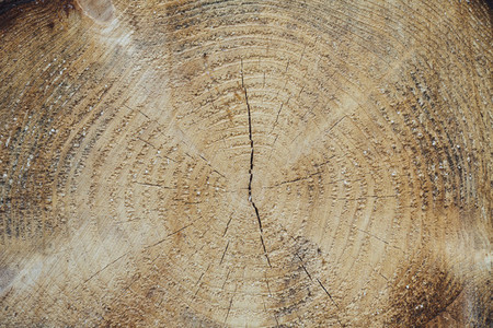 tree trunk forestry