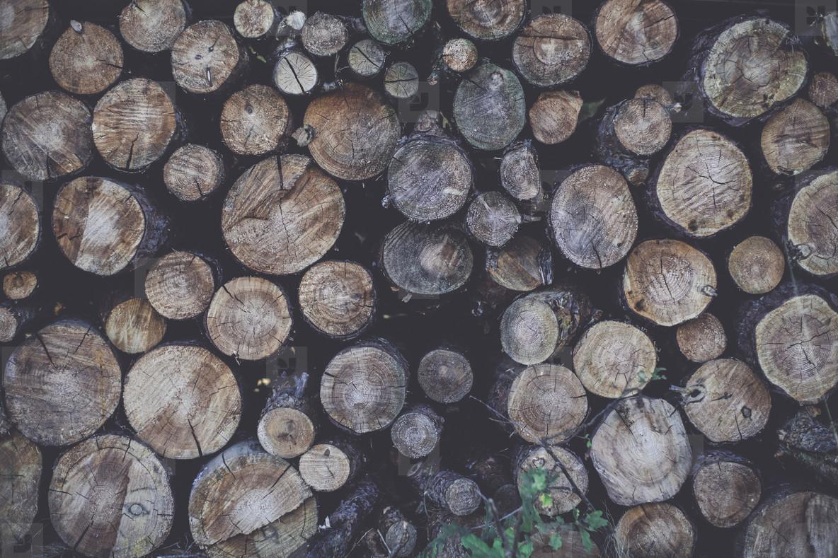 lumberjack curing firewood