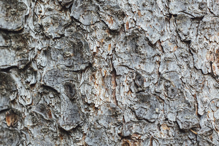 tree bark forest resource