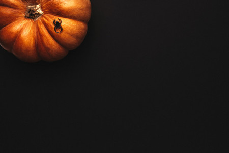 Halloween background with pumpkin and spider
