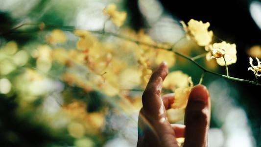 Oncidium Orchid Flowers 02