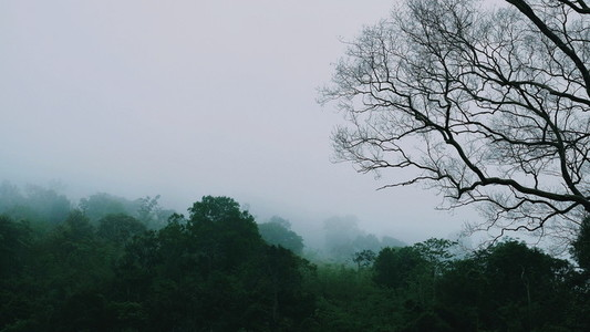 Misty landscape with forest