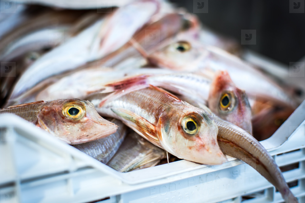 Glistening fish at fish market