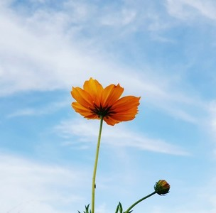 Daisy flower against blue sky