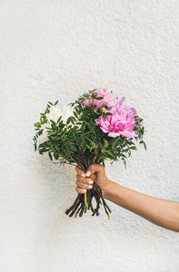 Bouquet of pink and white peony flowers in human hand