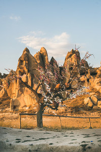 Natural volcanic rocks and tree with wishes  Turkey