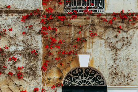 Ancient maltese house with red bougainvillea in the wall