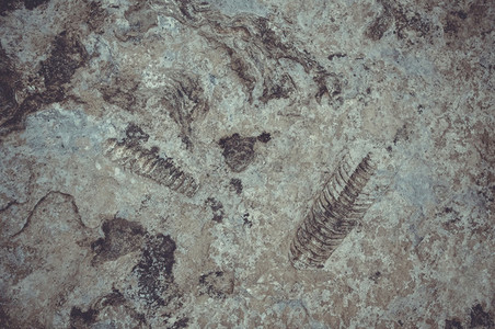fossil photo in stone