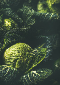 Raw fresh green cabbage texture and background  vertical composition