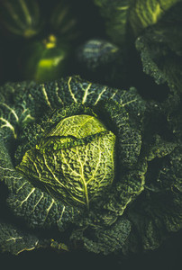 Close up of raw fresh green cabbage texture and background