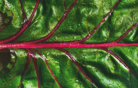 Flat lay of fresh green leaves of swiss chard  Alkaline diet