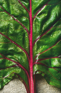 Flat lay of fresh green leaves of swiss chard  Vegetarian food
