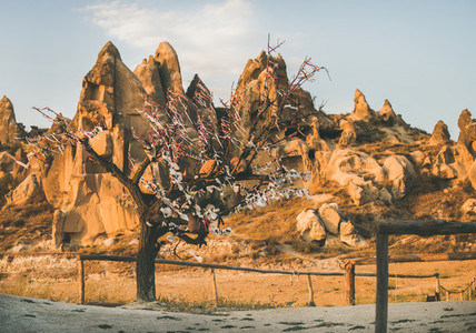 Natural volcanic rocks and tree with wish ribbons Turkey