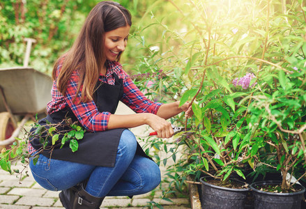 Nursery worker pruning a potted plant