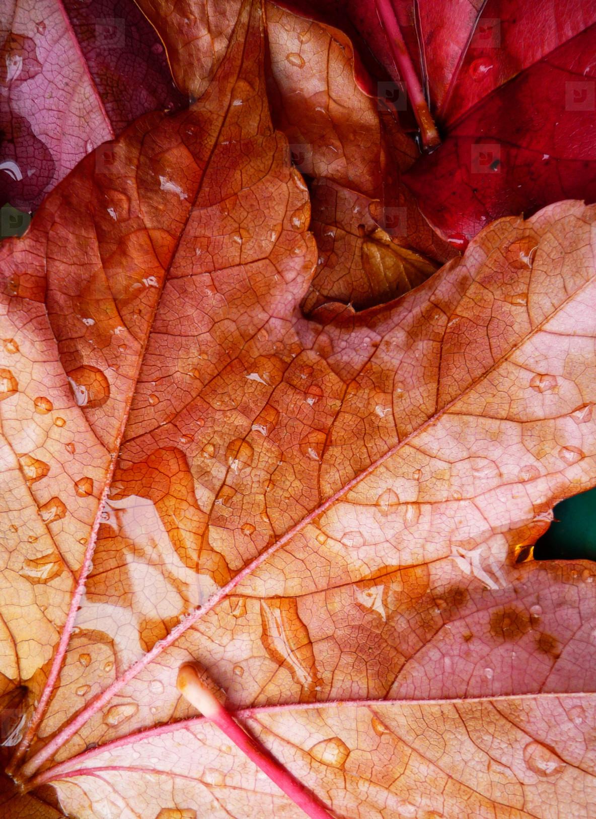 Photos Wet Autumn Leaves 158076 Youworkforthem
